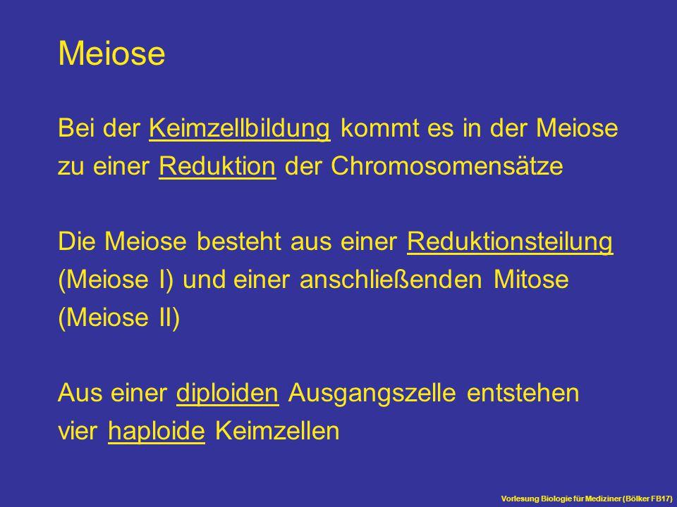 Vorlesung Biologie für Mediziner (Bölker FB17) Meiose Bei der Keimzellbildung kommt es in der Meiose zu einer Reduktion der Chromosomensätze Die Meios