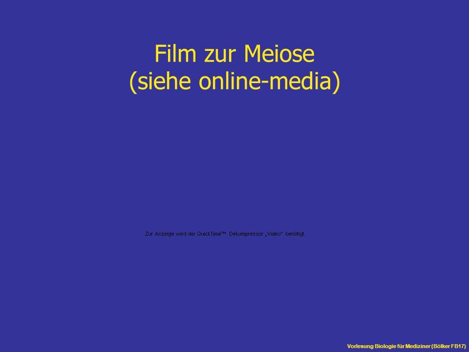 Vorlesung Biologie für Mediziner (Bölker FB17) Film zur Meiose (siehe online-media)