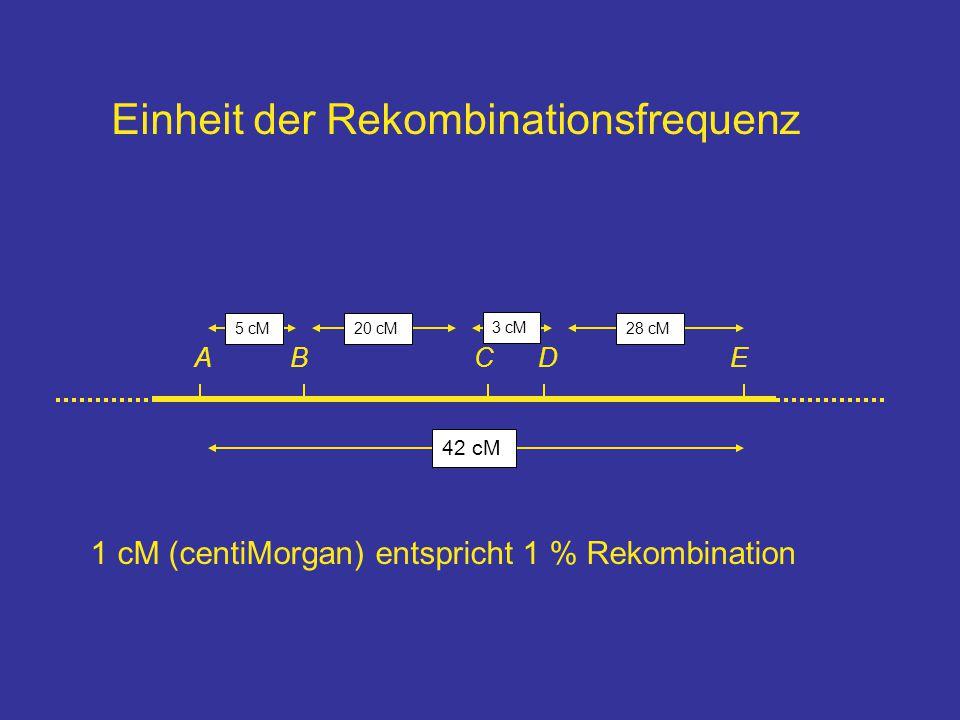 Einheit der Rekombinationsfrequenz ABCDE 1 cM (centiMorgan) entspricht 1 % Rekombination 42 cM 28 cM20 cM5 cM 3 cM