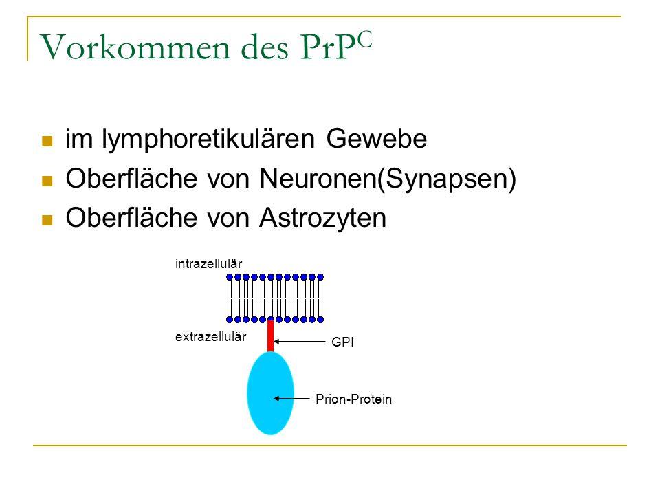 Vorkommen des PrP C im lymphoretikulären Gewebe Oberfläche von Neuronen(Synapsen) Oberfläche von Astrozyten intrazellulär extrazellulär GPI Prion-Prot