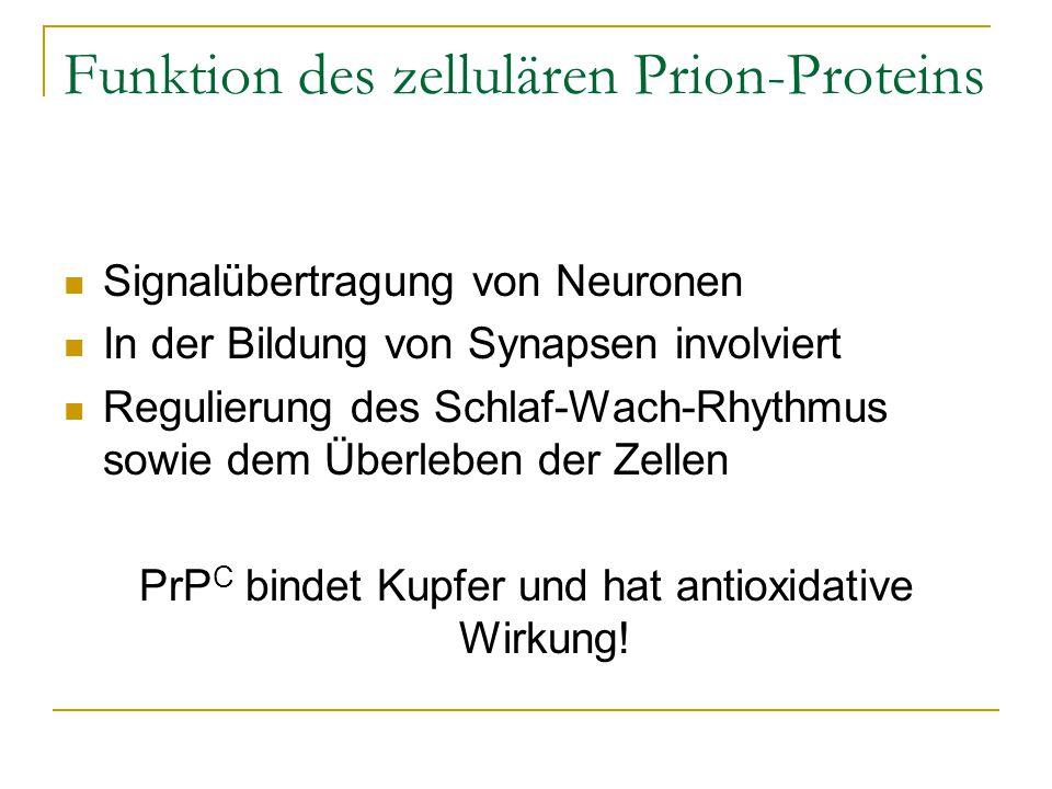 Funktion des zellulären Prion-Proteins Signalübertragung von Neuronen In der Bildung von Synapsen involviert Regulierung des Schlaf-Wach-Rhythmus sowie dem Überleben der Zellen PrP C bindet Kupfer und hat antioxidative Wirkung!