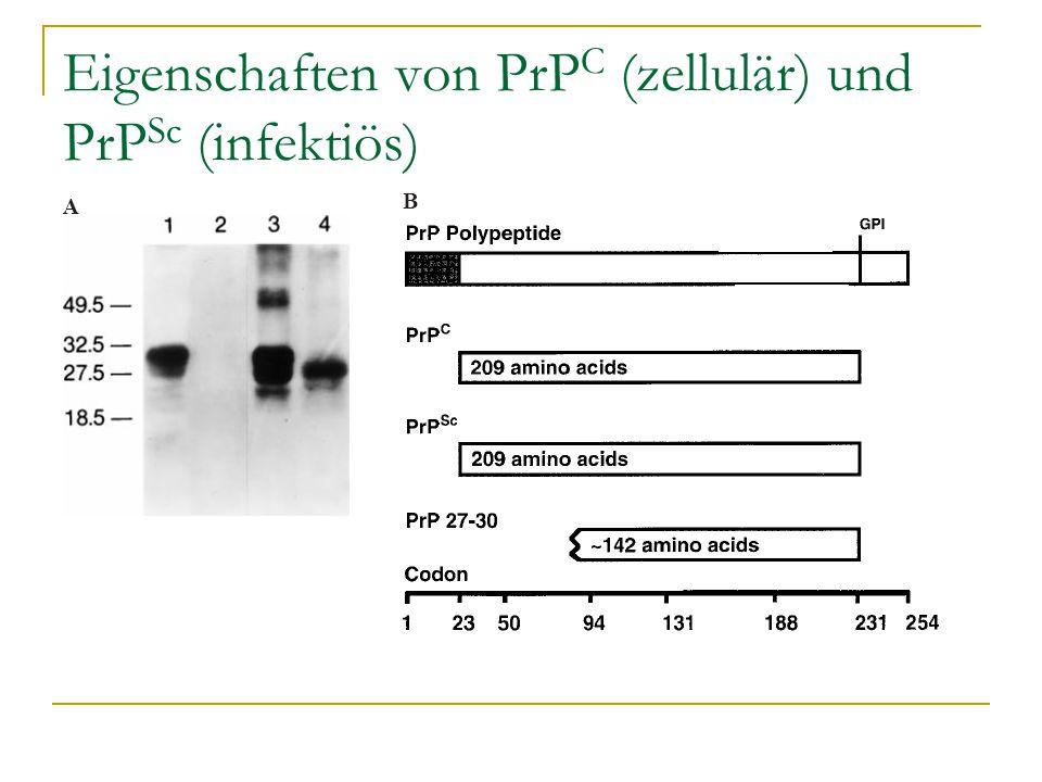 Eigenschaften von PrP C (zellulär) und PrP Sc (infektiös)