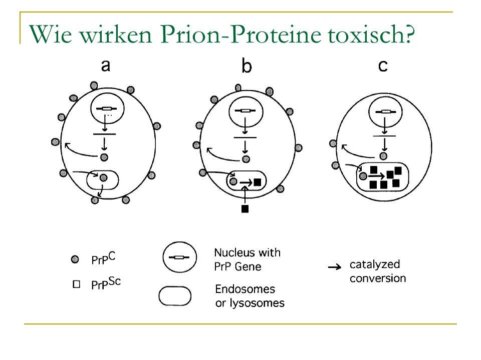 Wie wirken Prion-Proteine toxisch?