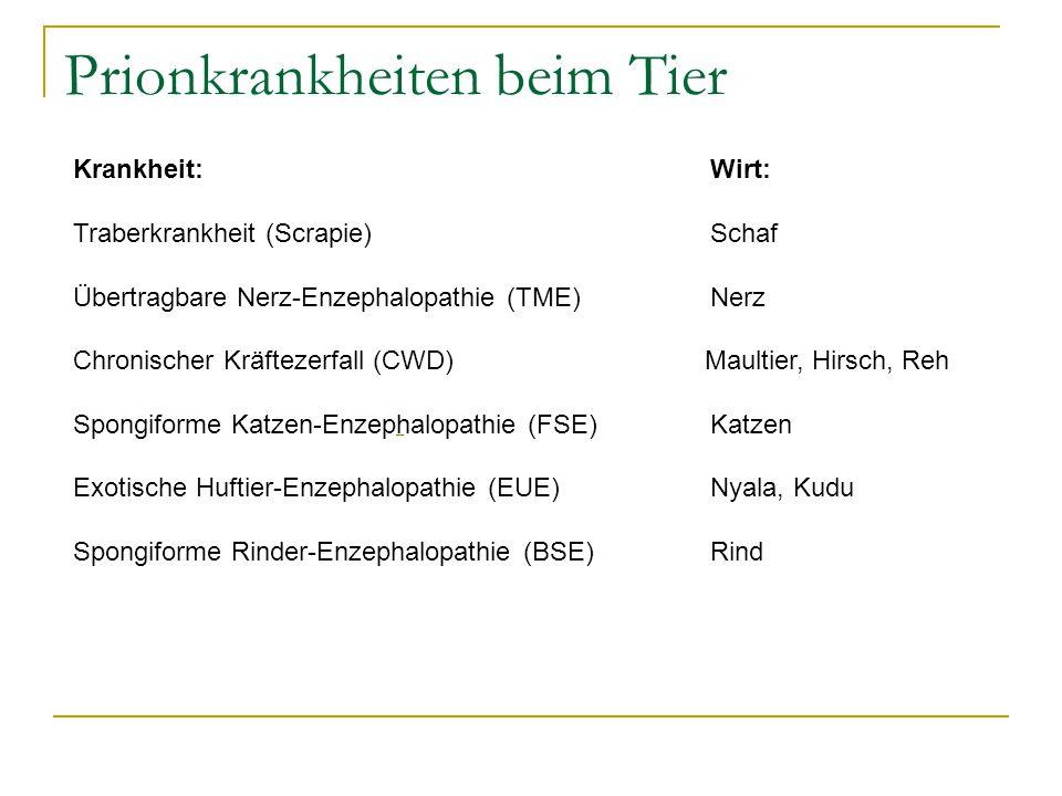 Prionkrankheiten beim Tier Krankheit: Wirt: Traberkrankheit (Scrapie) Schaf Übertragbare Nerz-Enzephalopathie (TME) Nerz Chronischer Kräftezerfall (CWD) Maultier, Hirsch, Reh Spongiforme Katzen-Enzephalopathie (FSE) Katzen Exotische Huftier-Enzephalopathie (EUE) Nyala, Kudu Spongiforme Rinder-Enzephalopathie (BSE) Rind