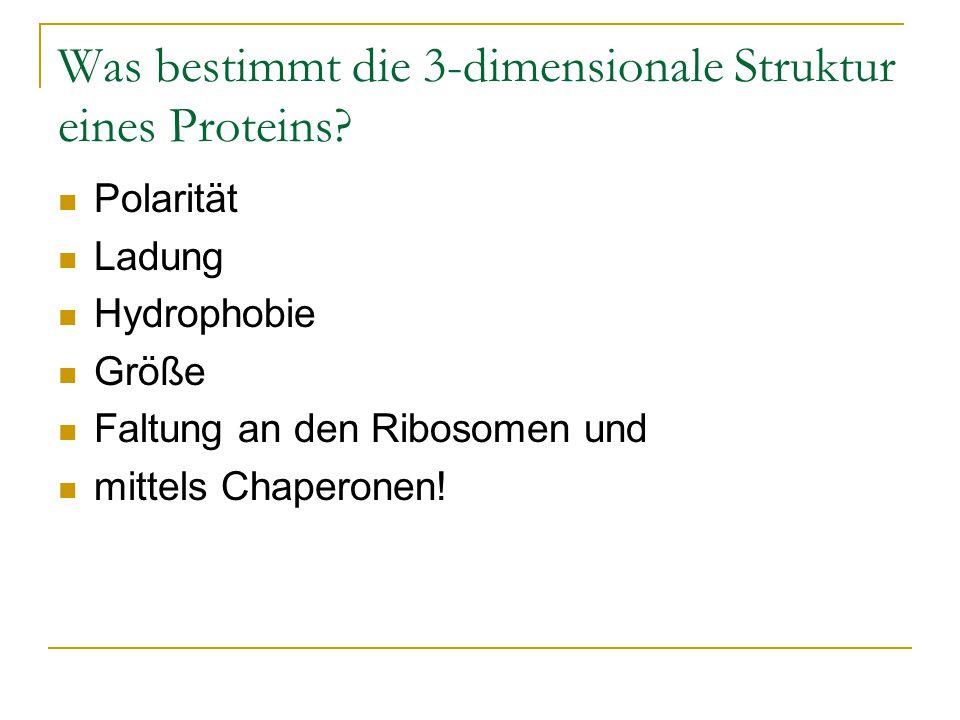 Was bestimmt die 3-dimensionale Struktur eines Proteins? Polarität Ladung Hydrophobie Größe Faltung an den Ribosomen und mittels Chaperonen!