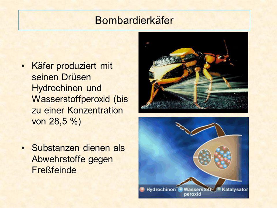 Bombardierkäfer Käfer produziert mit seinen Drüsen Hydrochinon und Wasserstoffperoxid (bis zu einer Konzentration von 28,5 %) Substanzen dienen als Ab