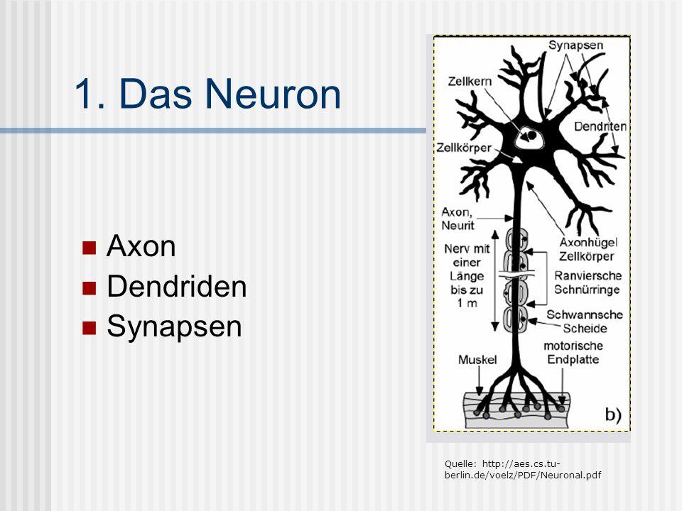 1. Das Neuron Axon Dendriden Synapsen Quelle: http://aes.cs.tu- berlin.de/voelz/PDF/Neuronal.pdf