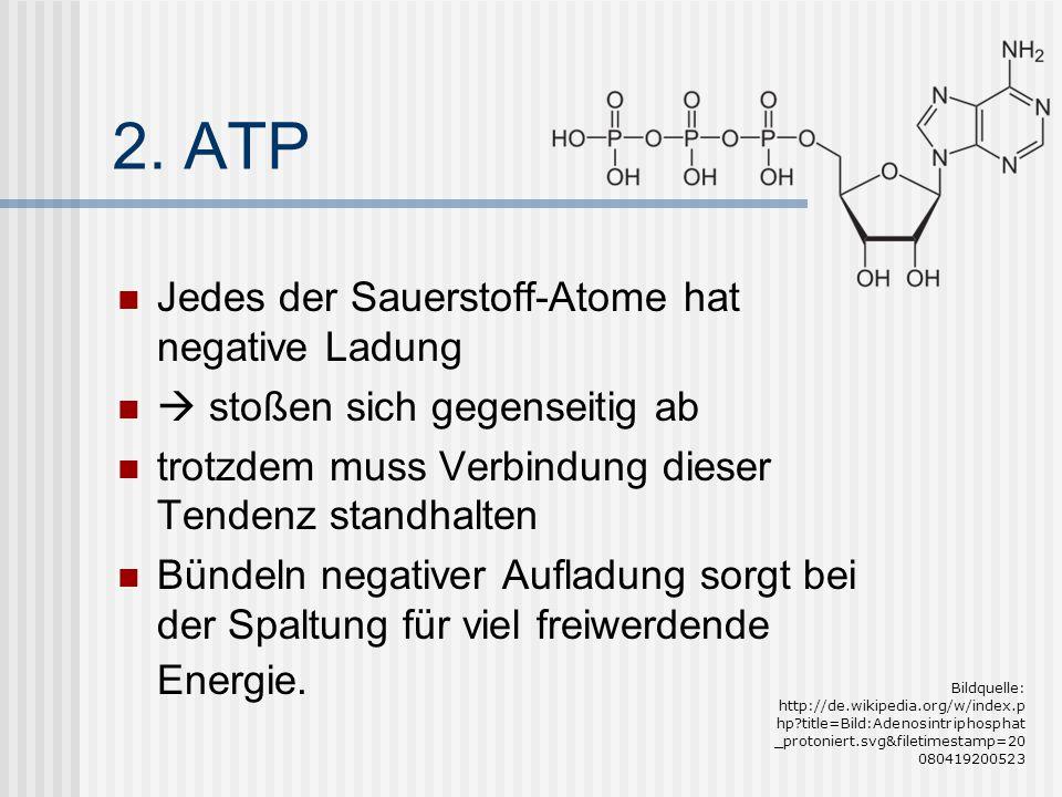 2. ATP Jedes der Sauerstoff-Atome hat negative Ladung  stoßen sich gegenseitig ab trotzdem muss Verbindung dieser Tendenz standhalten Bündeln negativ
