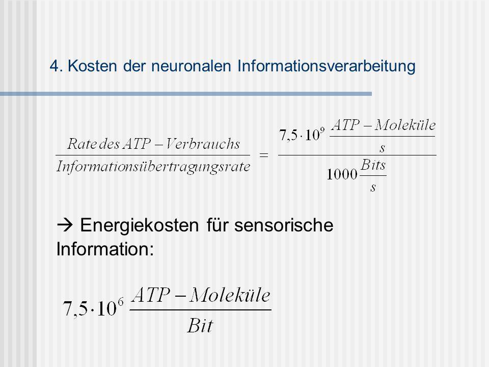  Energiekosten für sensorische Information: 4. Kosten der neuronalen Informationsverarbeitung