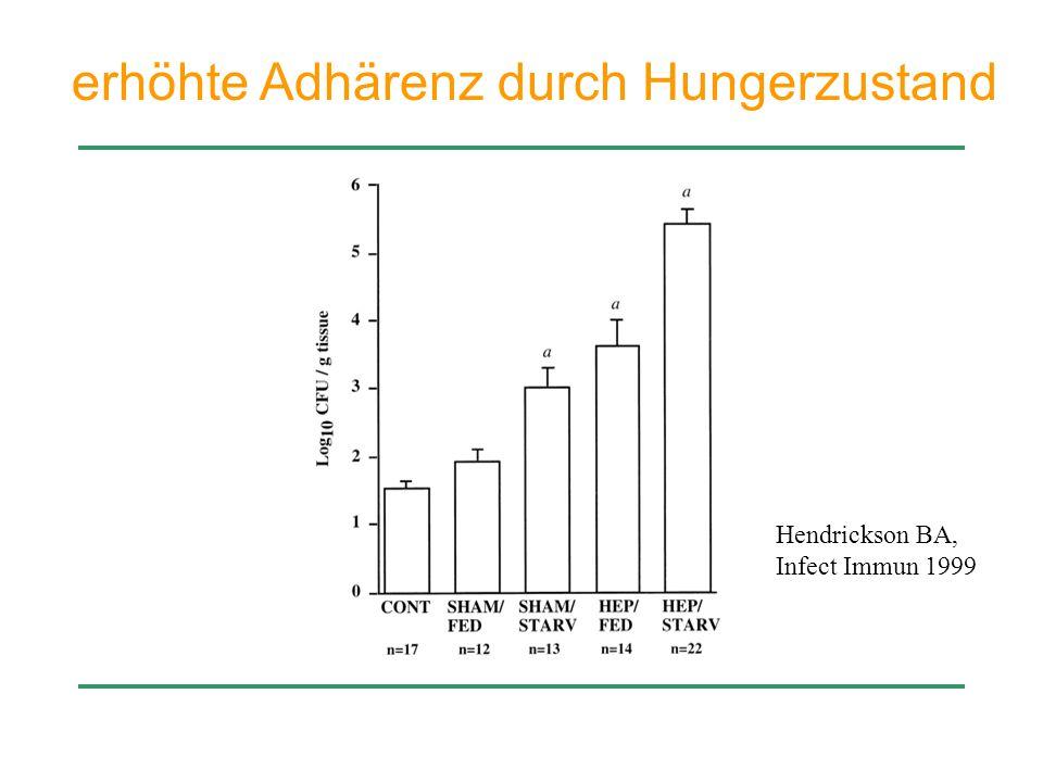 erhöhte Adhärenz durch Hungerzustand Hendrickson BA, Infect Immun 1999