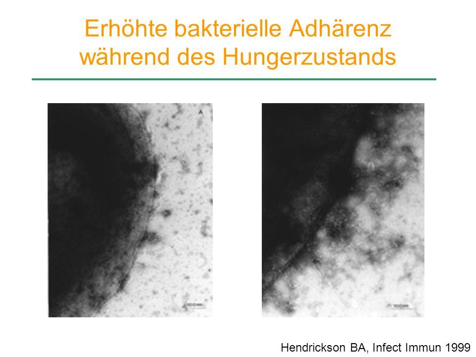 Erhöhte bakterielle Adhärenz während des Hungerzustands Hendrickson BA, Infect Immun 1999