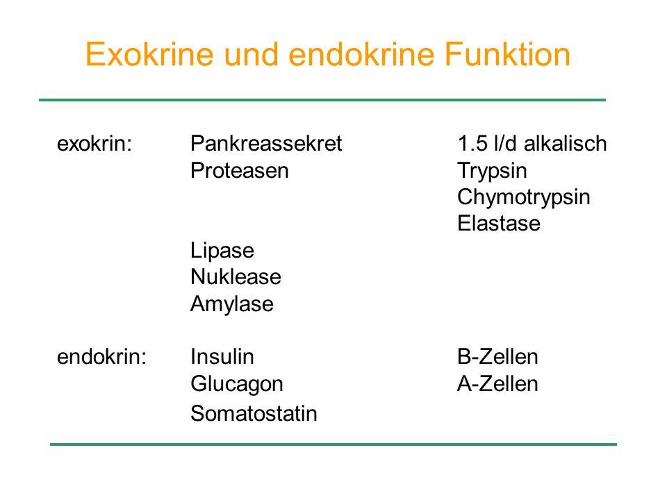 Exokrine und endokrine Funktion exokrin:Pankreassekret1.5 l/d alkalisch ProteasenTrypsin Chymotrypsin Elastase Lipase Nuklease Amylase endokrin:Insuli