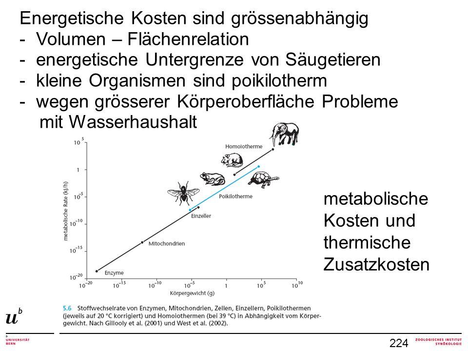 224 metabolische Kosten und thermische Zusatzkosten Energetische Kosten sind grössenabhängig - Volumen – Flächenrelation - energetische Untergrenze vo