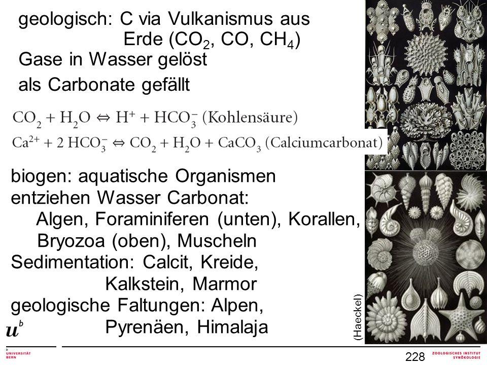 228 geologisch: C via Vulkanismus aus Erde (CO 2, CO, CH 4 ) Gase in Wasser gelöst als Carbonate gefällt biogen: aquatische Organismen entziehen Wasse