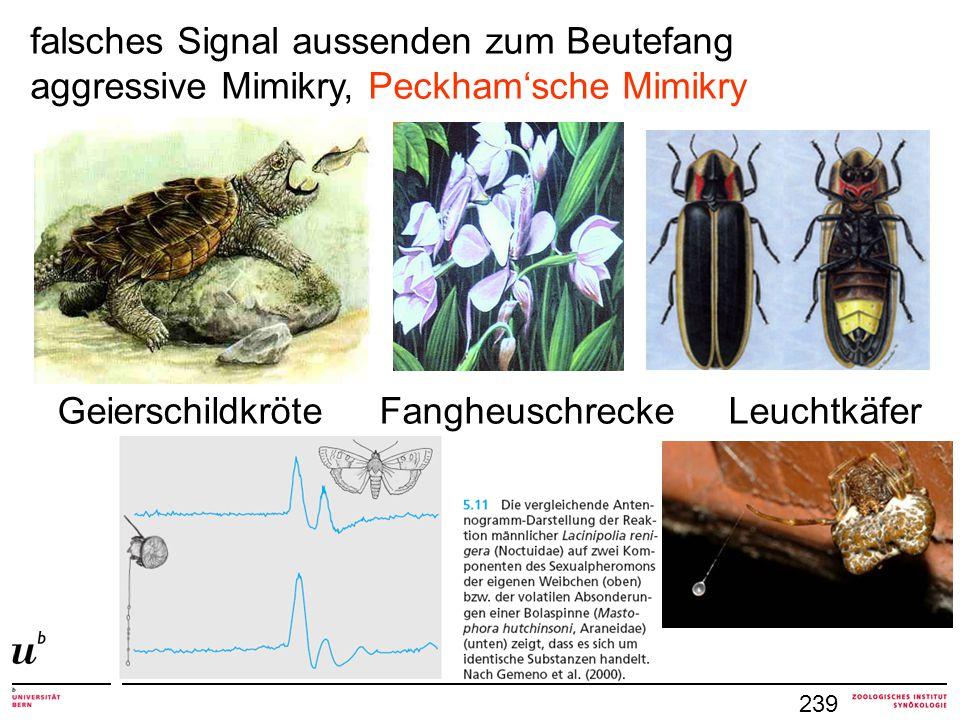 239 falsches Signal aussenden zum Beutefang aggressive Mimikry, Peckham'sche Mimikry Geierschildkröte Fangheuschrecke Leuchtkäfer