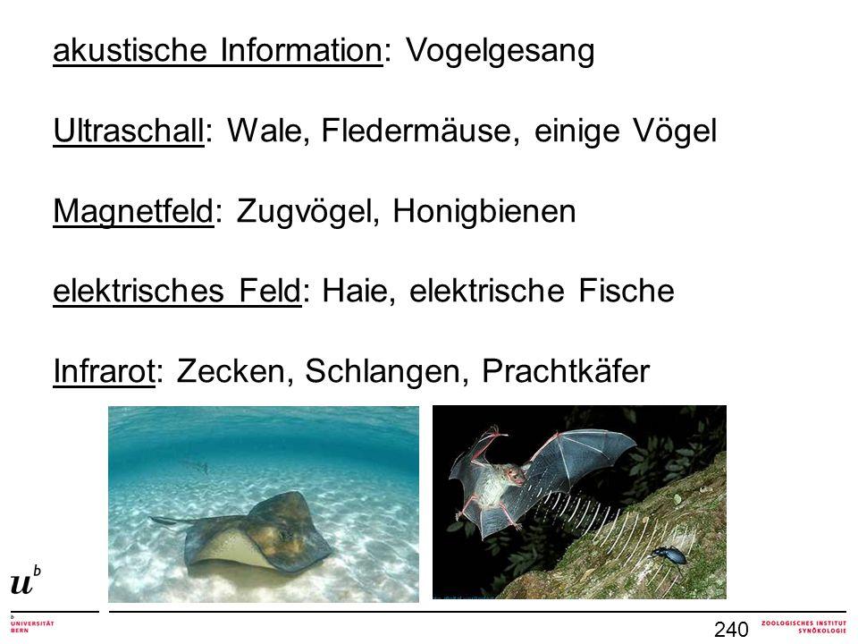 240 akustische Information: Vogelgesang Ultraschall: Wale, Fledermäuse, einige Vögel Magnetfeld: Zugvögel, Honigbienen elektrisches Feld: Haie, elektr