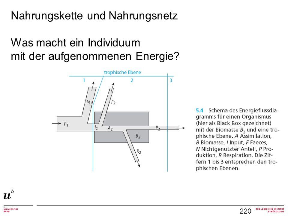 220 Nahrungskette und Nahrungsnetz Was macht ein Individuum mit der aufgenommenen Energie?