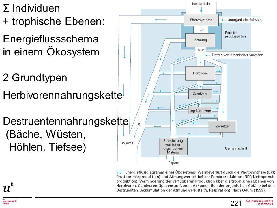 221 Σ Individuen + trophische Ebenen: Energieflussschema in einem Ökosystem 2 Grundtypen Herbivorennahrungskette Destruentennahrungskette (Bäche, Wüst
