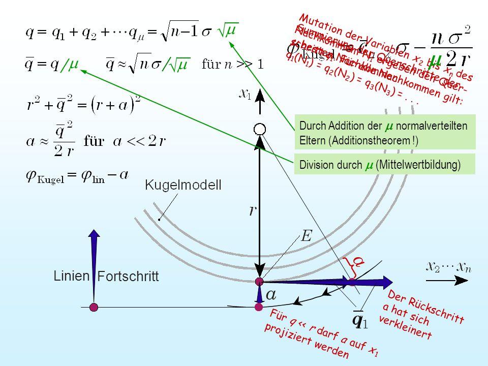 Für q << r darf a auf x 1 projiziert werden Mutation der Variablen x 2 bis x n des Nachkommem N 1 ergeben den Quer- schritt q 1.