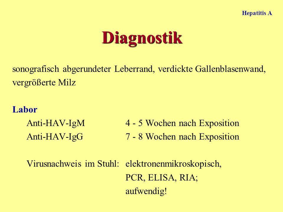 Hepatitis A Diagnostik sonografisch abgerundeter Leberrand, verdickte Gallenblasenwand, vergrößerte Milz Labor Anti-HAV-IgM 4 - 5 Wochen nach Expositi
