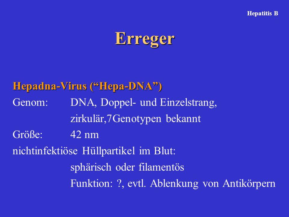 Erreger Hepadna-Virus ( Hepa-DNA ) Genom: DNA, Doppel- und Einzelstrang, zirkulär,7Genotypen bekannt Größe: 42 nm nichtinfektiöse Hüllpartikel im Blut: sphärisch oder filamentös Funktion: ?, evtl.