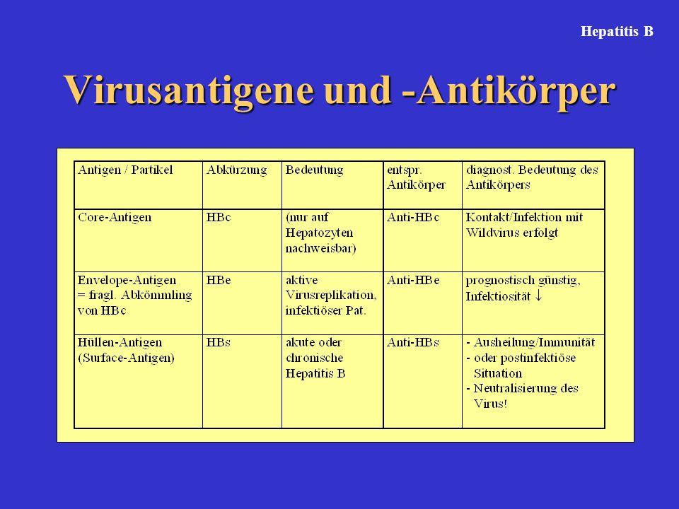 Virusantigene und -Antikörper Hepatitis B