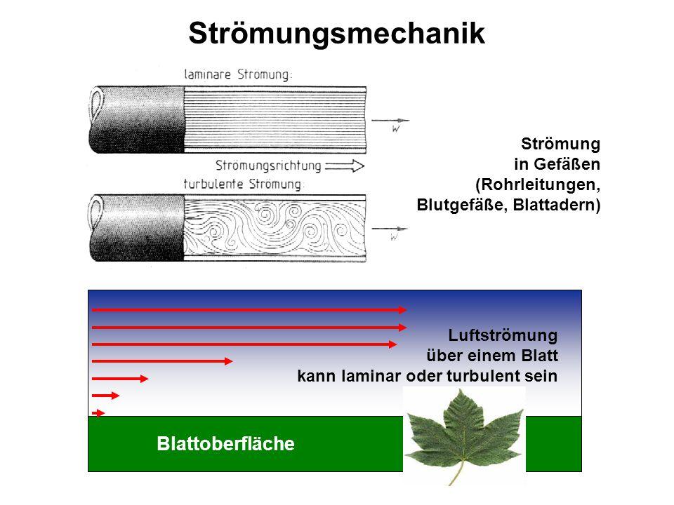 Strömungsmechanik Es gibt keine magnetischen Monopole !!! Blattoberfläche Luftströmung über einem Blatt kann laminar oder turbulent sein Strömung in G