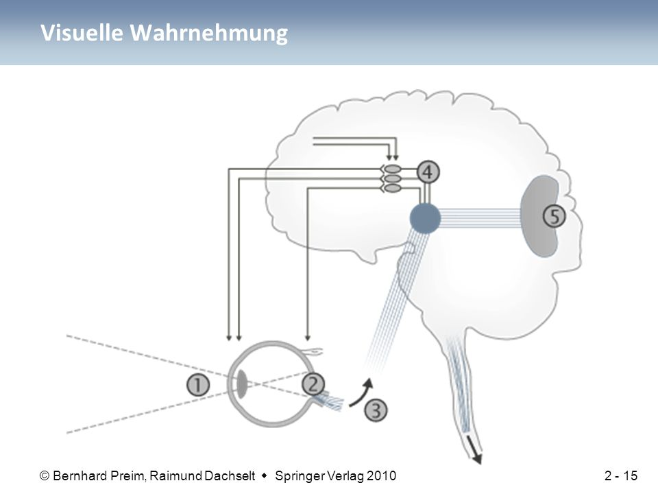 © Bernhard Preim, Raimund Dachselt  Springer Verlag 2010 Visuelle Wahrnehmung 2 - 15