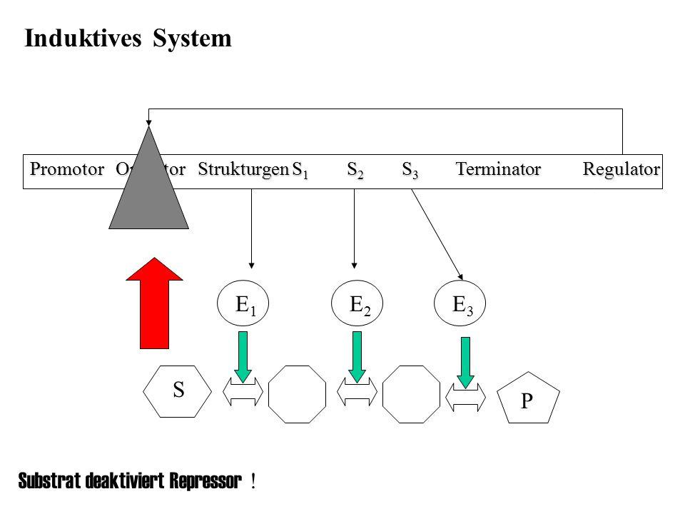 Promotor Operator Strukturgen S 1 S 2 S 3 Terminator Regulator E1E1 E3E3 E2E2 S P Induktives System Substrat deaktiviert Repressor !