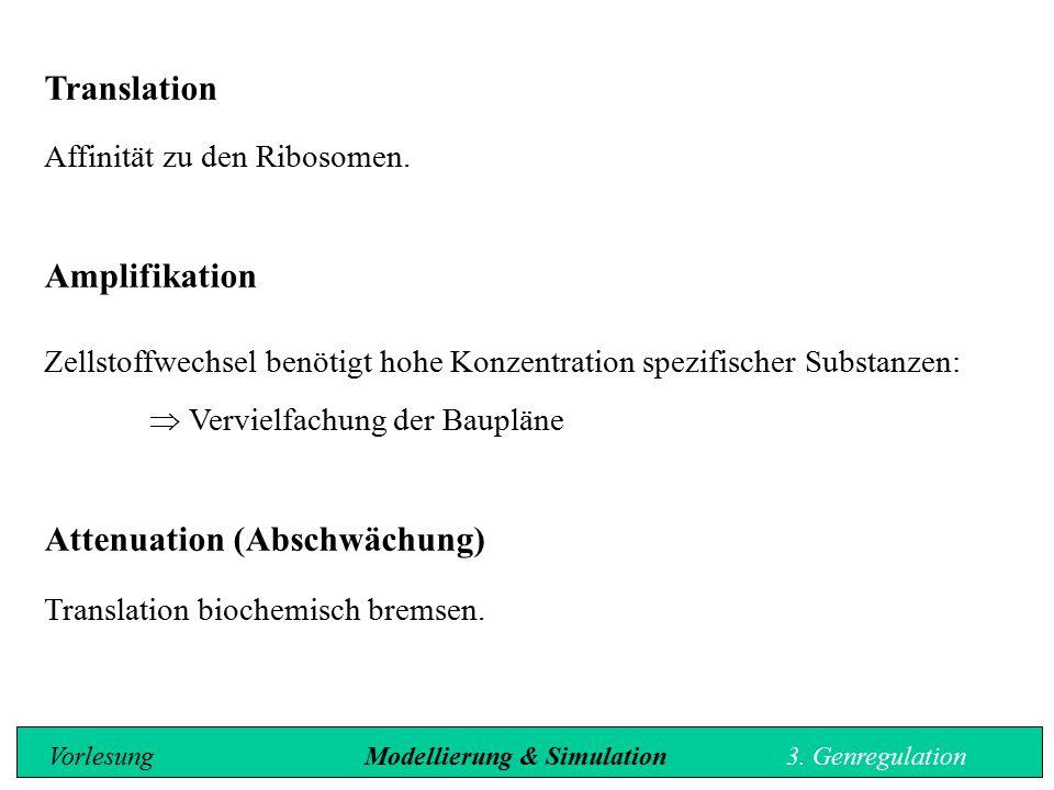 Translation Affinität zu den Ribosomen. Amplifikation Zellstoffwechsel benötigt hohe Konzentration spezifischer Substanzen:  Vervielfachung der Baupl