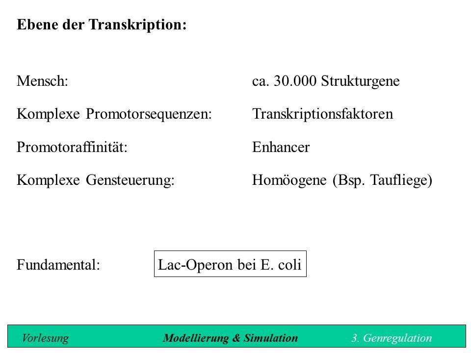 Ebene der Transkription: Mensch: ca. 30.000 Strukturgene Komplexe Promotorsequenzen:Transkriptionsfaktoren Promotoraffinität:Enhancer Komplexe Gensteu