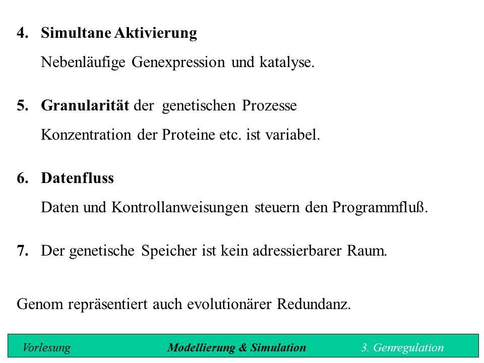 4.Simultane Aktivierung Nebenl ä ufige Genexpression und katalyse. 5.Granularität der genetischen Prozesse Konzentration der Proteine etc. ist variabe