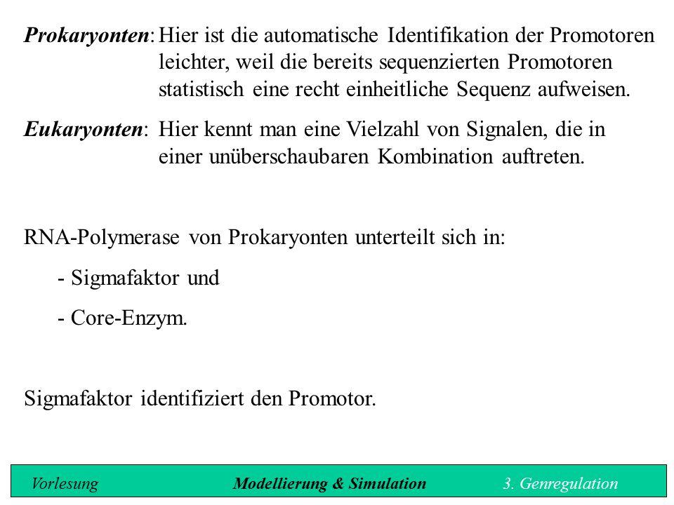 Prokaryonten:Hier ist die automatische Identifikation der Promotoren leichter, weil die bereits sequenzierten Promotoren statistisch eine recht einhei