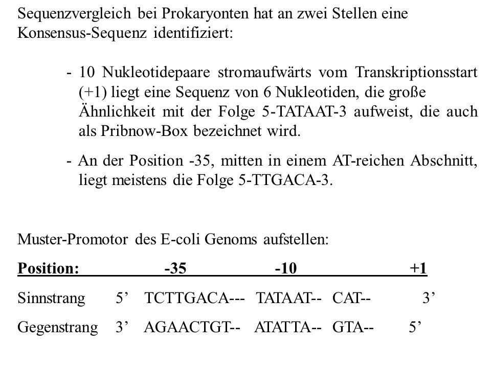 Sequenzvergleich bei Prokaryonten hat an zwei Stellen eine Konsensus-Sequenz identifiziert: - 10 Nukleotidepaare stromaufwärts vom Transkriptionsstart
