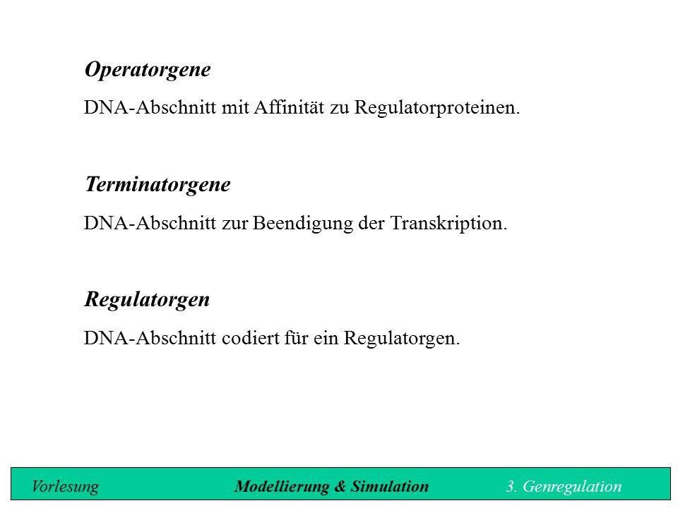 Operatorgene DNA-Abschnitt mit Affinität zu Regulatorproteinen. Terminatorgene DNA-Abschnitt zur Beendigung der Transkription. Regulatorgen DNA-Abschn