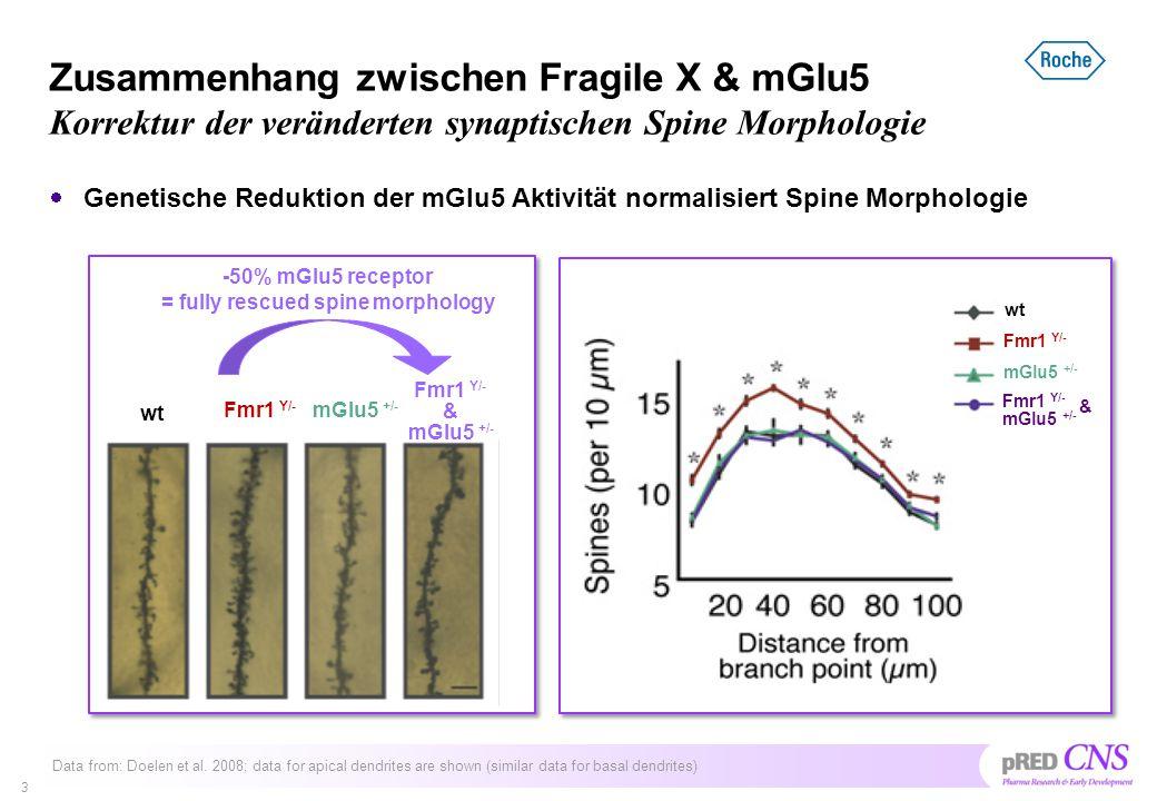 CTEP – eine langlebiger mGlu5 Antagonist  mGlu5 Antagonisten mit einer langlebigen Wirkung in der Maus waren bis vor kurzem nicht verfügbar, um die mGlu5-Fragiles X Hypothese zu testen  Roche hat mit CTEP zum ersten Mal solch einen mGlu5 Antagonisten beschrieben  In Zusammenarbeit mit Mark Bear wurde CTEP in der Fragilen X Maus unter chronischen Bedingungen getestet.