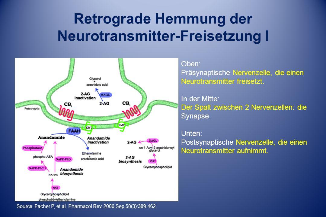 Retrograde Hemmung der Neurotransmitter-Freisetzung I Oben: Präsynaptische Nervenzelle, die einen Neurotransmitter freisetzt.