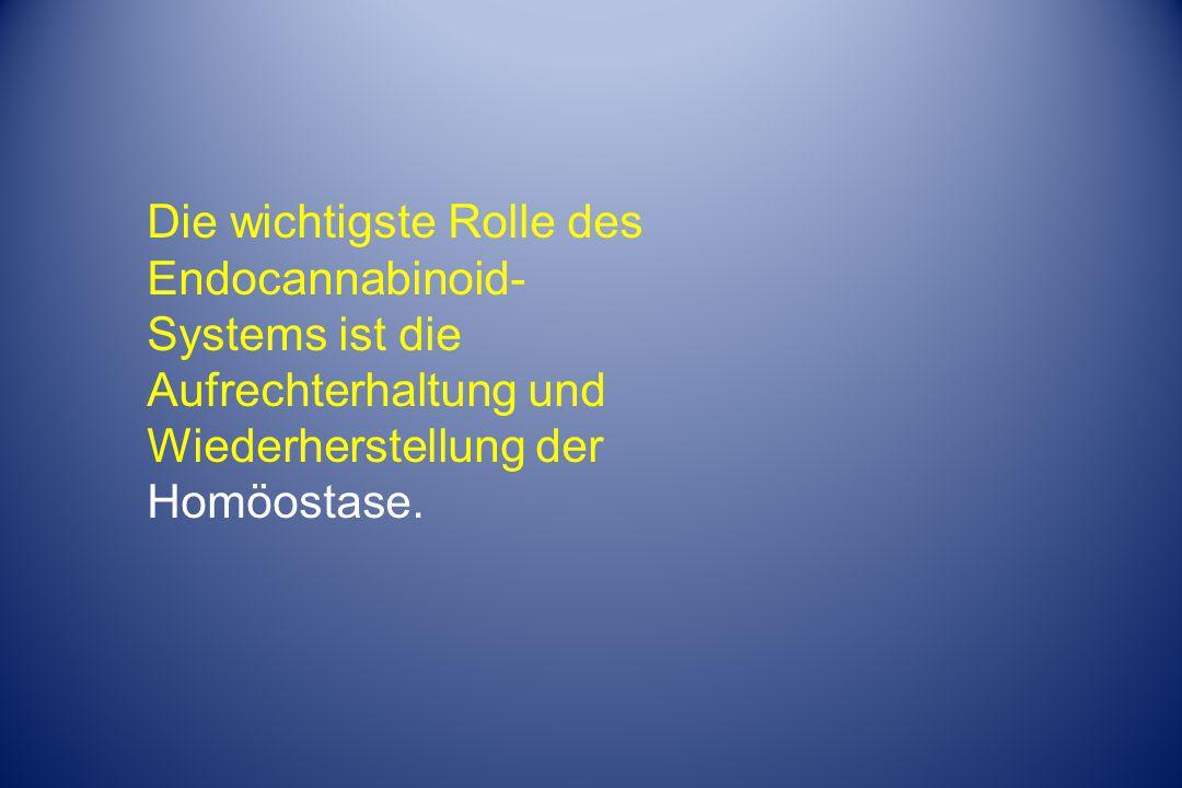 Die wichtigste Rolle des Endocannabinoid- Systems ist die Aufrechterhaltung und Wiederherstellung der Homöostase.