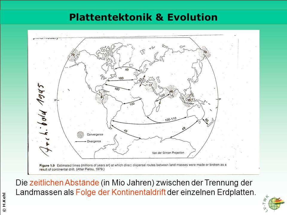 © H.Kehl Plattentektonik & Evolution Die zeitlichen Abstände (in Mio Jahren) zwischen der Trennung der Landmassen als Folge der Kontinentaldrift der e