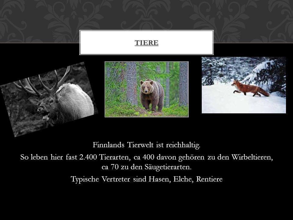Finnlands Tierwelt ist reichhaltig.