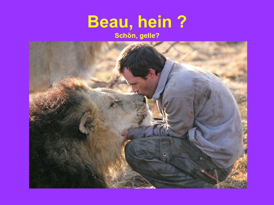 Beau, hein ? Schön, gelle?