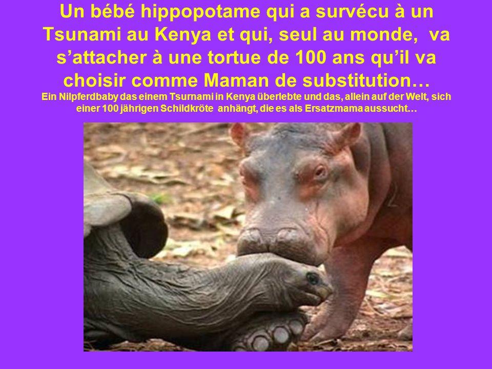 Un bébé hippopotame qui a survécu à un Tsunami au Kenya et qui, seul au monde, va s'attacher à une tortue de 100 ans qu'il va choisir comme Maman de substitution… Ein Nilpferdbaby das einem Tsurnami in Kenya überlebte und das, allein auf der Welt, sich einer 100 jährigen Schildkröte anhängt, die es als Ersatzmama aussucht…