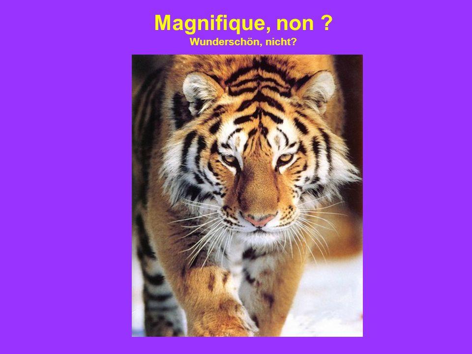 Magnifique, non ? Wunderschön, nicht?