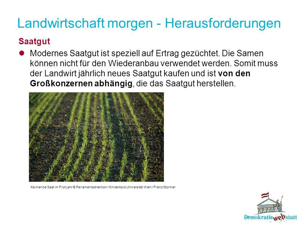 Landwirtschaft morgen - Herausforderungen Saatgut Modernes Saatgut ist speziell auf Ertrag gezüchtet.