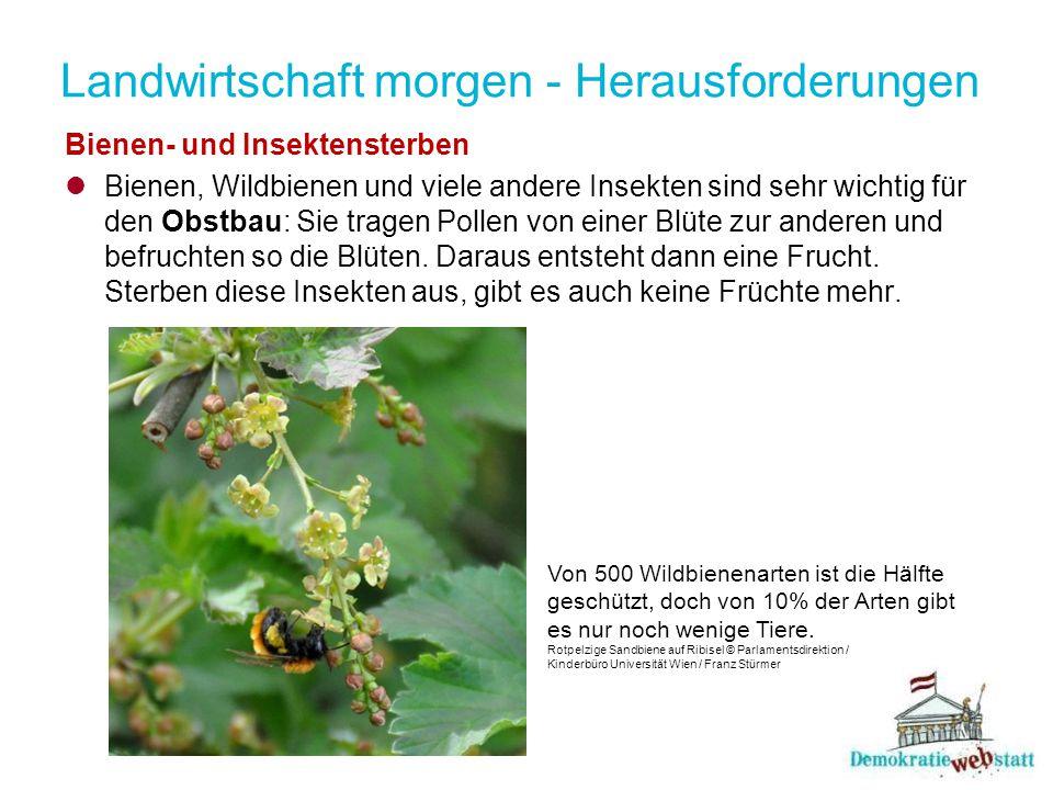 Landwirtschaft morgen - Herausforderungen Bienen- und Insektensterben Bienen, Wildbienen und viele andere Insekten sind sehr wichtig für den Obstbau: Sie tragen Pollen von einer Blüte zur anderen und befruchten so die Blüten.