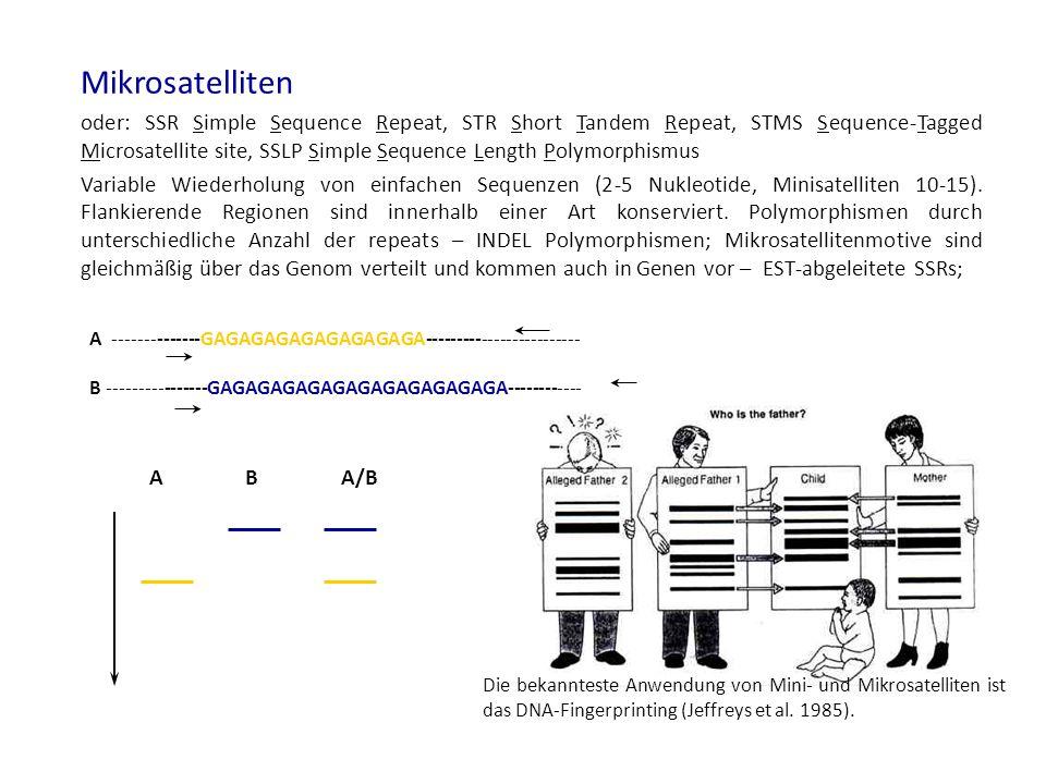 7 Detektion von Mikrosatelliten Polymorphismen beruhen auf INDELs, Detektion = Fragmentgrößenbestimmung Gel-basierende Systeme Agarose Gele Hochauflösende Agarosegele Native Acrylamidgele Sequenziergele (denaturierende Acrylamidgel) Agarosegel (2.5%) Acrylamidgel (6%) SSR Marker Tom316 auf 10 Tomatenlinien.
