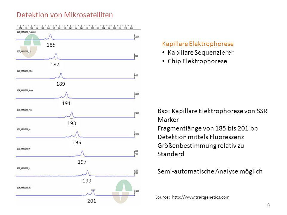 """Vor- und Nachteile von Mikrosatelliten + sehr gut reproduzierbar, wenig DNA nötig + ko-dominant + Locus spezifisch und viele SSR Marker sind genetisch kartiert + einfache Handhabung und sehr gut automatisierbar + hohe Zahl an Allelen in einem Mikrosatellitenlocus + direkt verwendbar in der marker-gestützten Selektion - Entwicklungskosten aufgrund des Sequenzierungsbedarfs - nicht für alle landwirtschaftlichen Nutzpflanzen entwickelt Anwendung Wichtiger Markertyp für die praktische Pflanzenzüchtung: Marker-gestützten Selektion, Sortenidentifizierung, genetische Diversitätsstudien, """"Ankermarker zum Erstellen von genetischen Karten, kartieren von wichtigen Merkmalen;"""