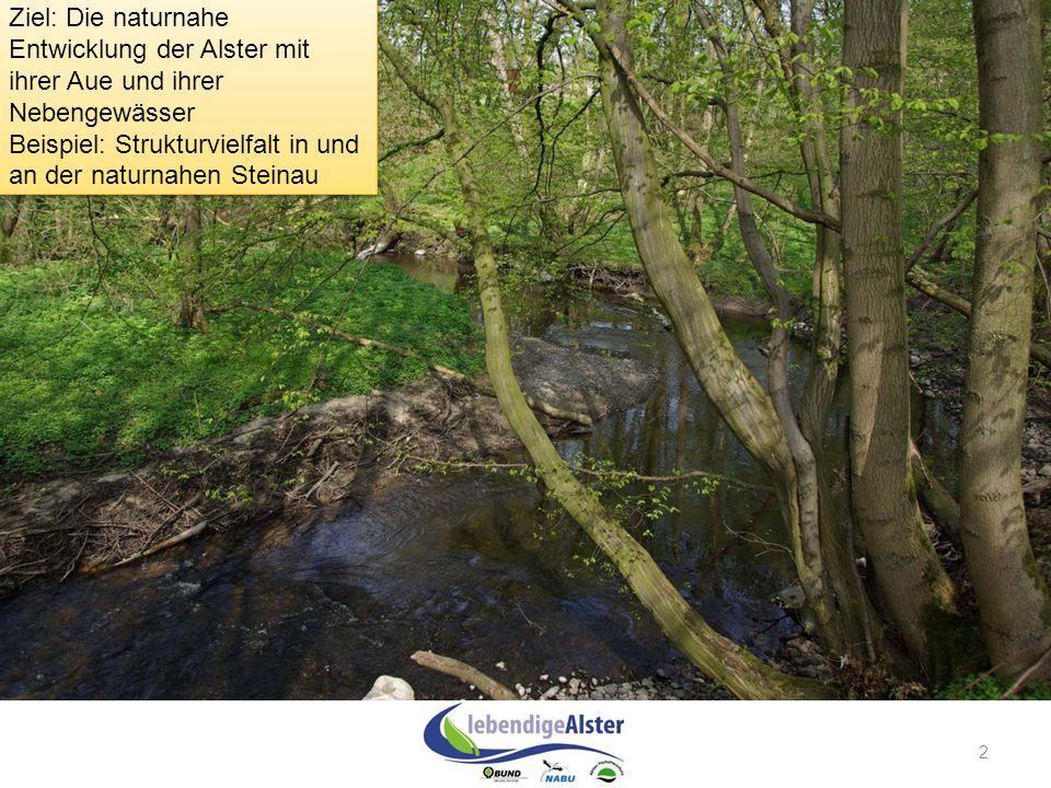 2 Ziel: Die naturnahe Entwicklung der Alster mit ihrer Aue und ihrer Nebengewässer Beispiel: Strukturvielfalt in und an der naturnahen Steinau Ziel: D