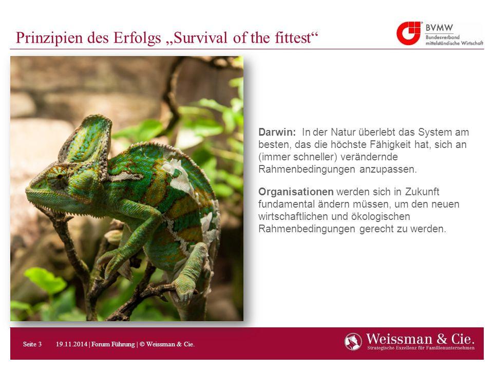 """Prinzipien des Erfolgs """"Survival of the fittest"""" Darwin: In der Natur überlebt das System am besten, das die höchste Fähigkeit hat, sich an (immer sch"""