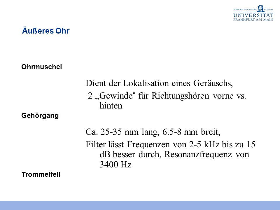 """Äußeres Ohr Ohrmuschel Dient der Lokalisation eines Geräuschs, 2 """"Gewinde für Richtungshören vorne vs."""
